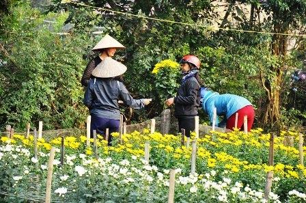 Nhiều khách đã đến mua hoa cho ngày 23 tháng Chạp.