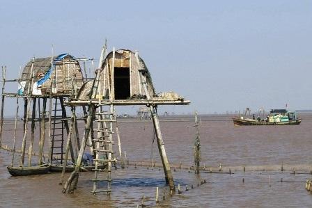 Khu vực khai thác ngao trên huyện biển Thái Bình.