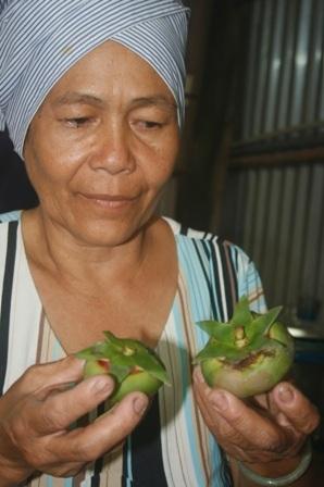 Trái bần quê bình dị được bà Cúc tuyển lựa, sản xuất ra bột bồn dùng nấu lẩu chua, canh chua