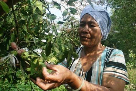 Trái bần hoang dã có nhiều ở vùng đất bãi bổi được bà Cúc tận dụng sản xuất bột bần