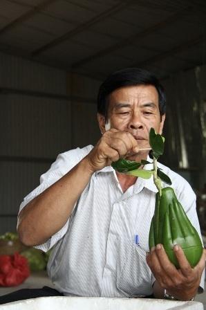 Hình dáng siêu độc nên bưởi hình tay Phật dự kiến đắt hàng trong dịp Tết