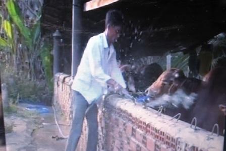 Đối tượng bị bắt quả tang đang bơm nước vào bò