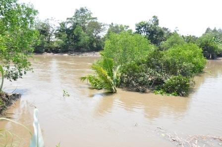 Cây trồng bị cuốn ra giữa sông