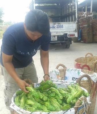 Thương lái thu mua hoa thanh long ở Tiền Giang