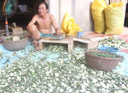 Cam còn non được thương lái thu gom sau đó xắt mỏng, phơi khô để xuất bán sang Trung Quốc