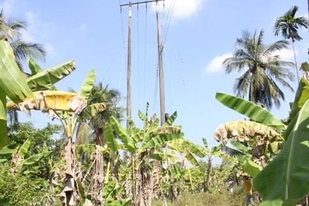 Đường dây điện ảnh hưởng nghiêm trọng đến quyền sử dụng đất của gia đình bà Bé.