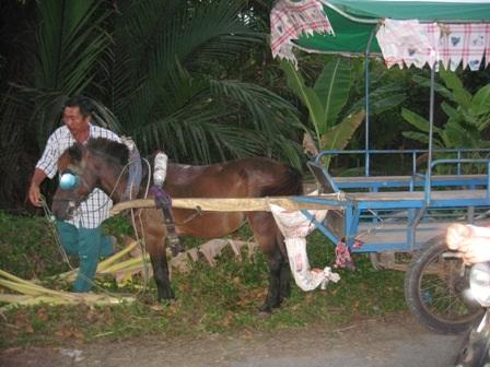 Xe ngựa tông vào xe mô tô khiến cụ ông tử vong
