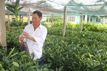 Nhiều loại cây giống đặc sản ở ĐBSCL đang có giá rất cao, khan hàng