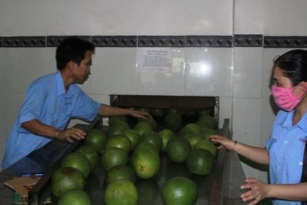 Giá trái cây đặc sản tăng cao nên người dân mạnh dạn chuyển đồi cây trồng