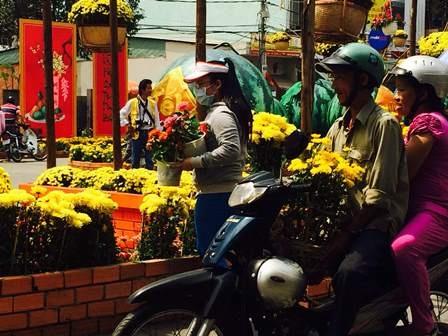 Người chọn hoa cúc