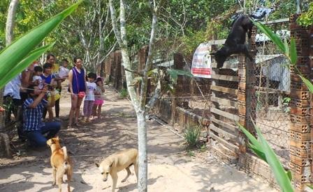 Chó leo rào biểu diễn chào du khách đến xem