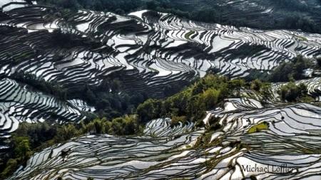Ruộng bậc thang ở Trung Quốc