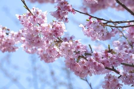 Góc nhỏ mùa xuân