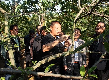 Các doanh nghiệp Đài Loan khảo sát vùng trồng na tại xã Việt Dân (Đông Triều).