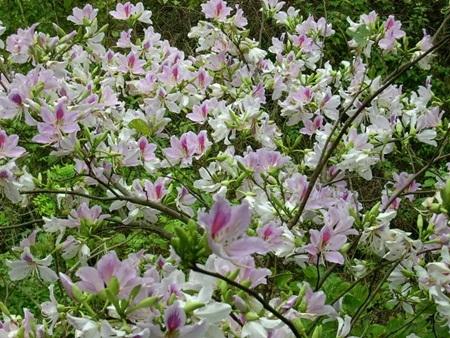 Ngẩn ngơ trước những loài hoa tuyệt đẹp vùng Tây Bắc