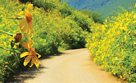 Những bông hoa nở rực rỡ hai bên lối đi