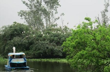 Đi thuyền dạo quanh đảo Cò