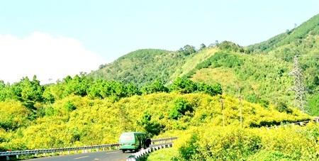 Màu vàng ươm tràn ngập khắp núi đồi cao nguyên.