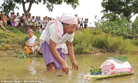 Đôi ếch được thả tự do ở bờ sông