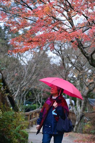 Sắc đỏ vàng của mùa Momiji
