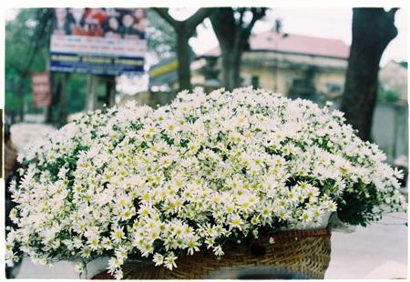 Đang mùa nở rộ, những bó cúc họa mi đẹp đến nao lòng xuất hiện trên khắp phố phường Hà Nội