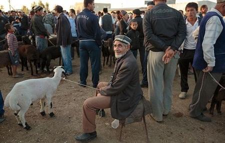 Chợ gia súc, Bukhara, Uzbekistan