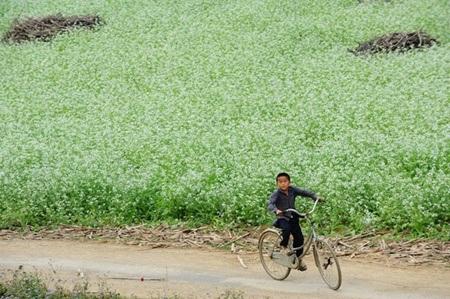 Những thảm hoa trắng muốt khoe sắc cùng trời đất