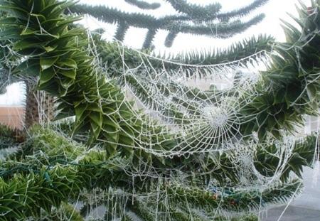 Cây thông Noel trang trí bằng mạng nhện giả của người dân Ucraine