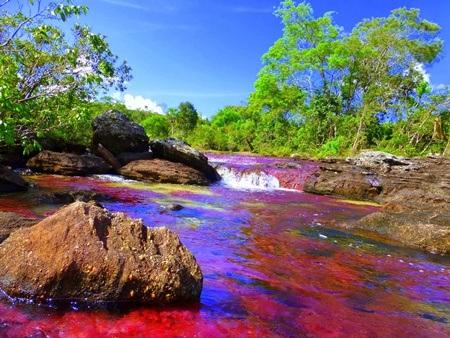 Sông Cano Cristales còn có tên gọi khác là sông cầu vồng, sông thiên đường
