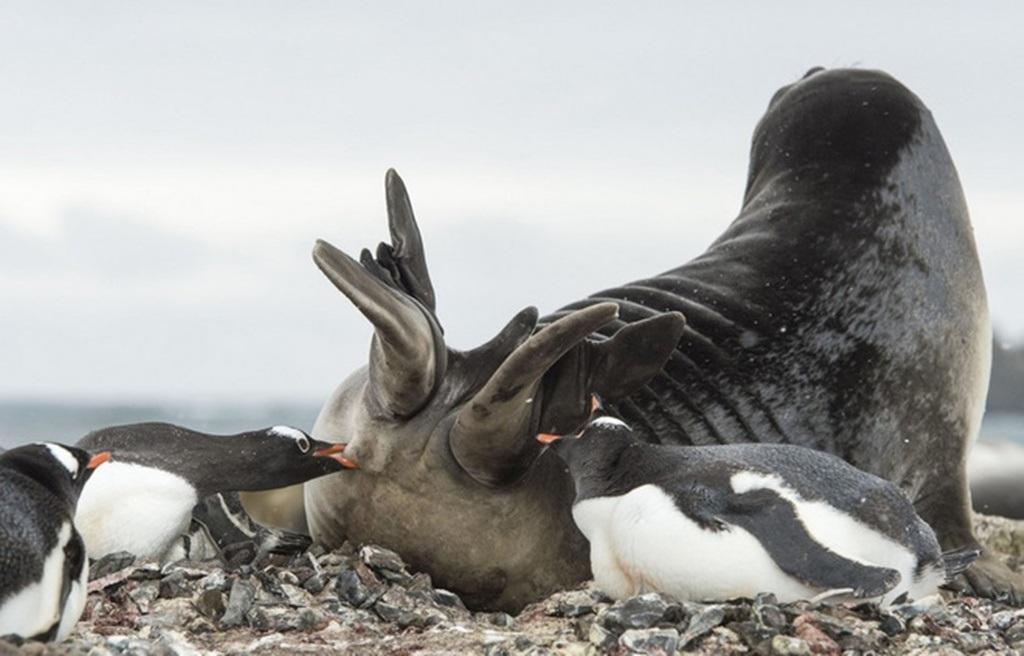 """Cuối cùng, một con chim đã mổ vào mông """"kẻ xâm lăng"""" để cảnh cáo"""