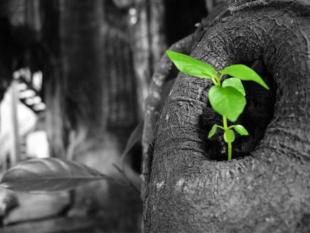 3 việc nên làm và 4 việc nên tránh trong ngày Tết của người Việt