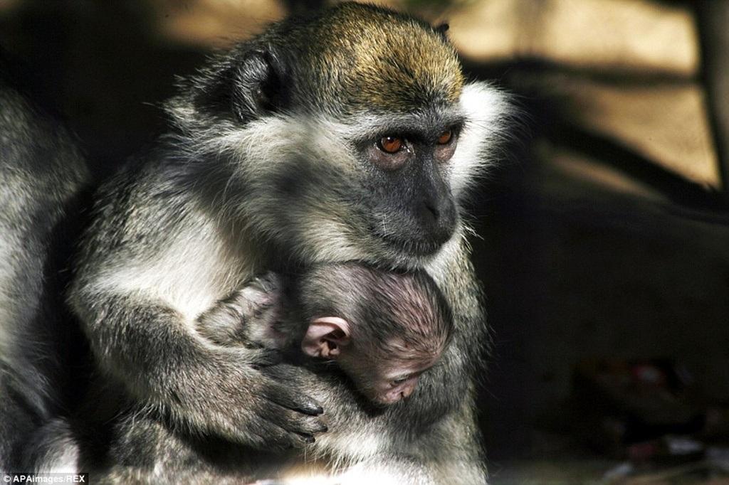 Một số động vật hiếm hoi còn sống sót sau thời gian dài bị bỏ đói