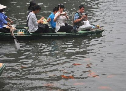Sự xuất hiện của đàn cá đã khiến cho du khách rất thích thú.