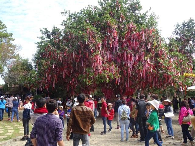 Khu khách quốc tế rất thích thú với nhiều loại hoa trưng bày trong Vườn hoa thành phố