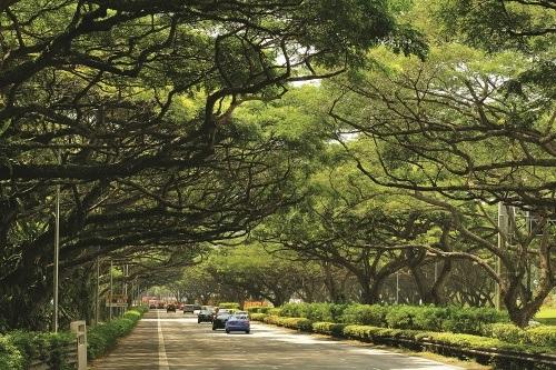 Đường phố Singapore rợp bóng cây