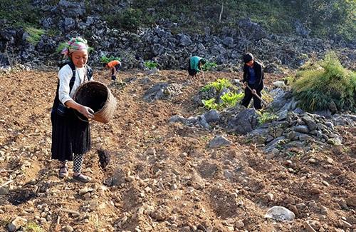 Làm đất chuẩn bị cho vụ trồng mới.