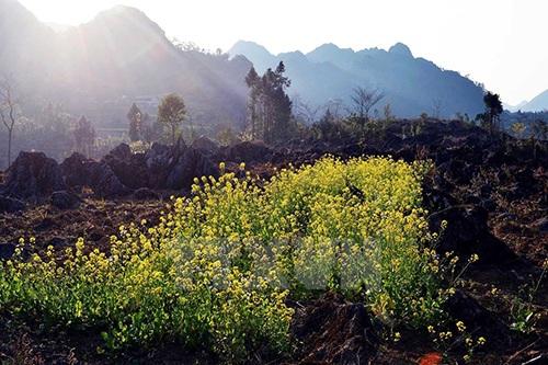 Vẻ đẹp hoang sơ khi chiều buông trên cao nguyên Đồng Văn.