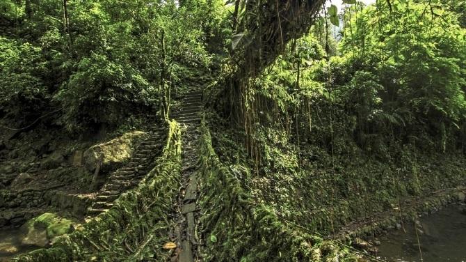 Bộ tộc hàng trăm năm kéo rễ cây tết thành cầu đi lại