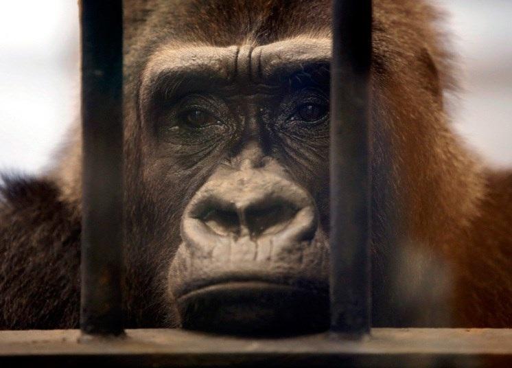 Ảnh trong tuần: Giây phút đầy cảm xúc của thế giới động vật