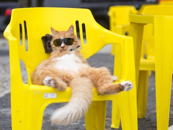 Chú mèo nghỉ ngơi trên bãi biển Sao Conrado ở Rio de Janeiro, Brazil. (Nguồn: Xinhua Press)