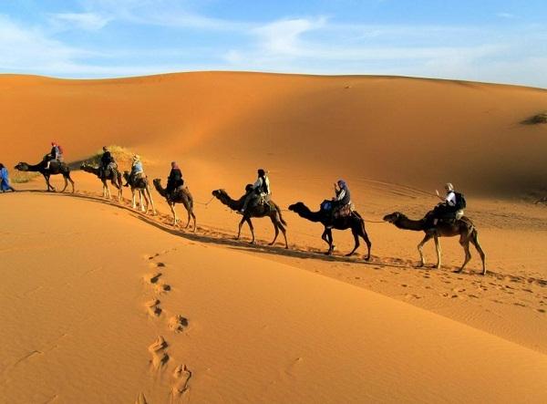 Những chú lạc đà này sẽ đưa du khách vượt sa mạc.