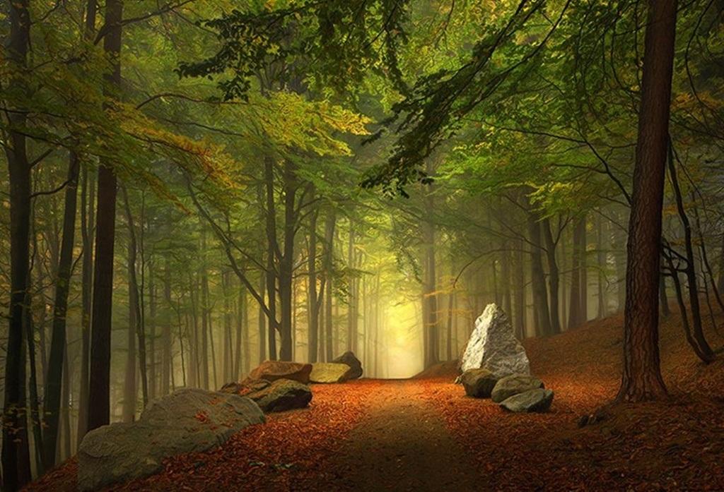 Lối mòn trong khu rừng thuộc vùng Bavaria, Đức.