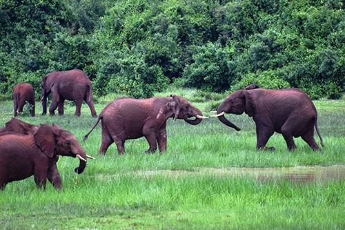Khung cảnh hoang dã ở Kenya.