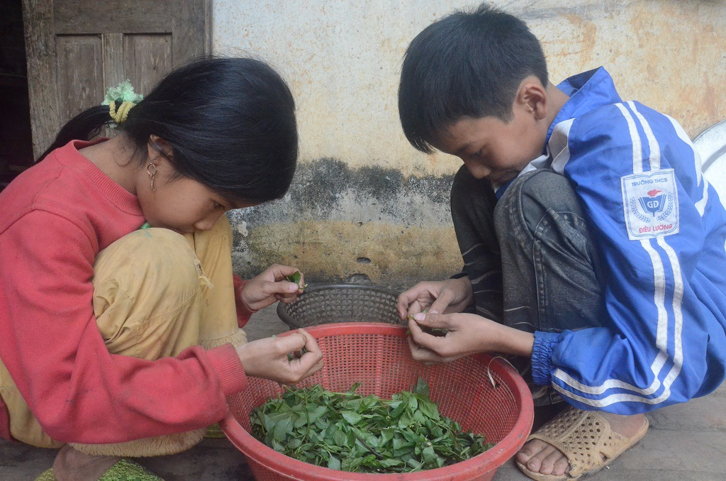 Thức ăn thường ngày của 4 người thường là rau Tầm bóp kiếm được ngoài đồng như thế này.