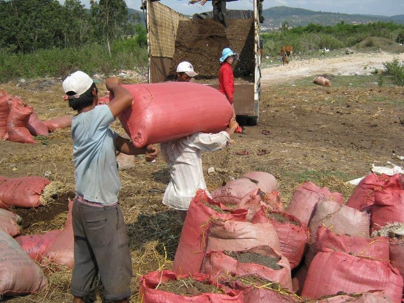 Chuyển phân bò lên xe tải mang đi bán tại các tỉnh xa để bón cây thanh long và cà phê.
