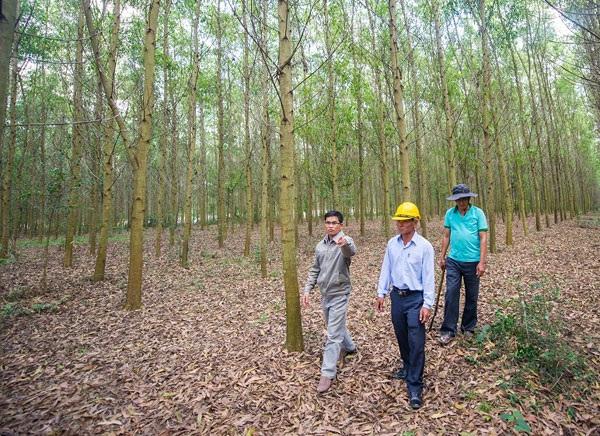 Trồng rừng mang lại cuộc sống ấm no cho nhiều nông dân.