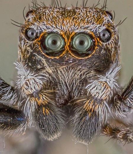 Cận cảnh chân dung của một chú nhện.