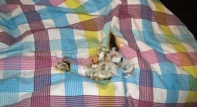 Thiệt hại nơi chiếc giường ngủ nơi vụ cháy xảy ra