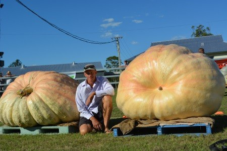 Dale Oliver bên 2 trái bí ngô khổng lồ của mình, trong đó trái bên phải có khối lượng 743kg