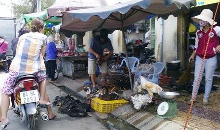 Cúm gia cầm đe dọa nhưng thành phố còn 36 điểm bán gà vịt lậu